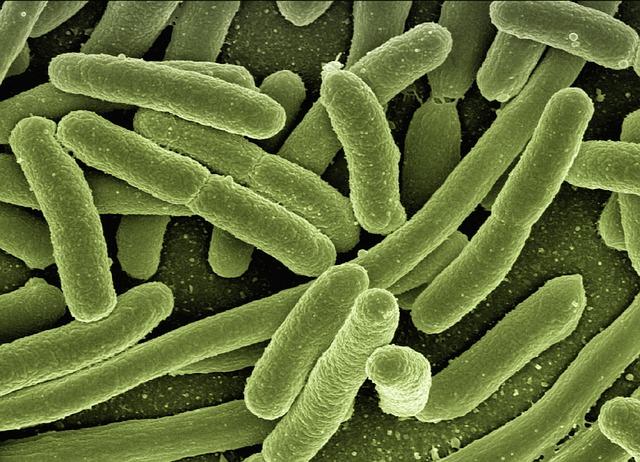 contaminación en los alimentos