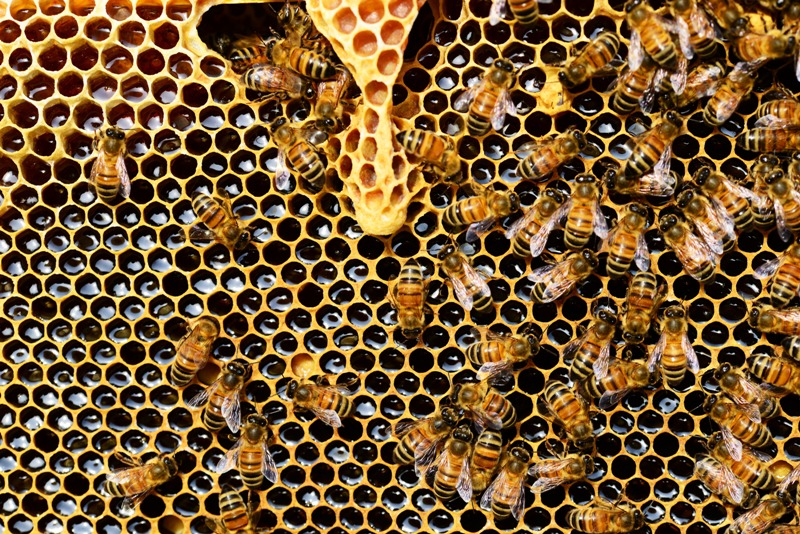 Curiosidades de las abejas y su miel - panal de abejas