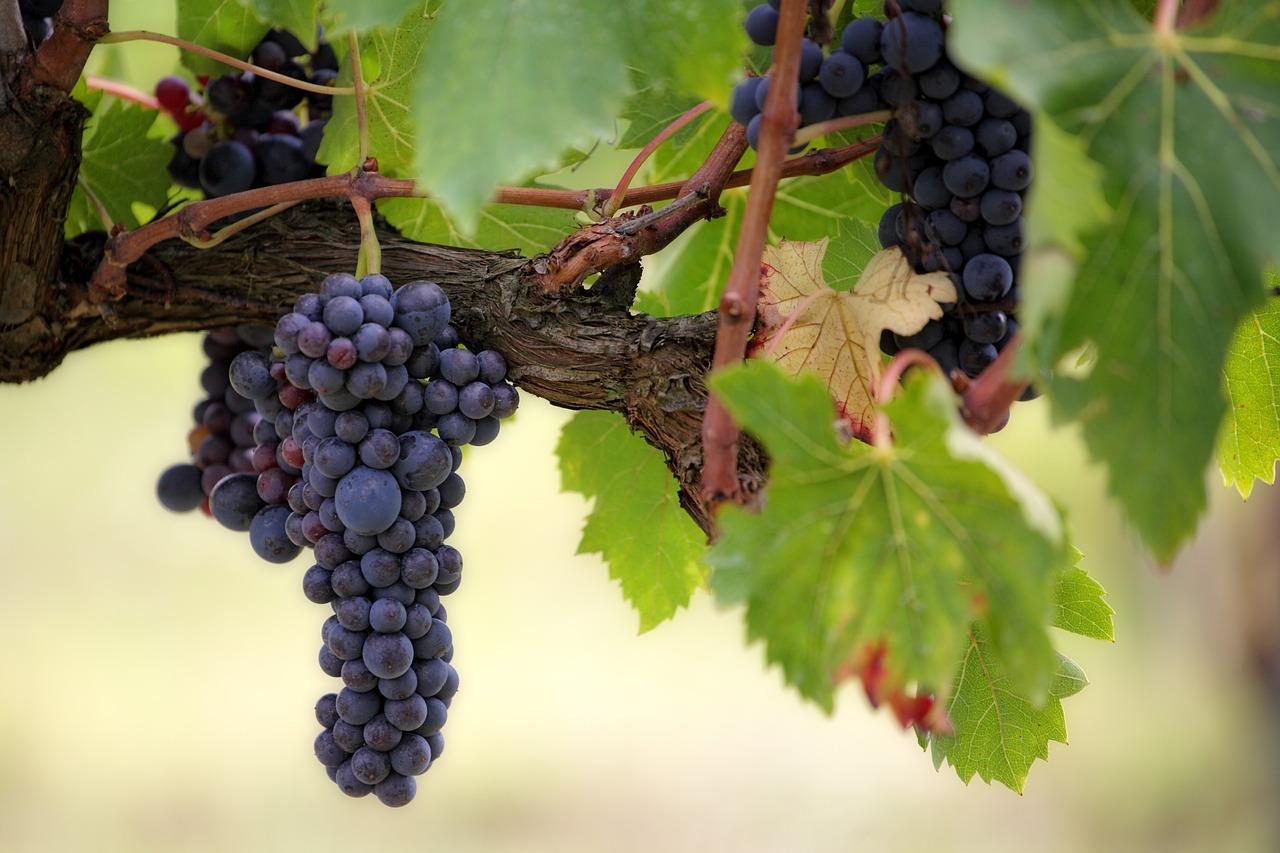 Superalimentos-Racimo de uvas